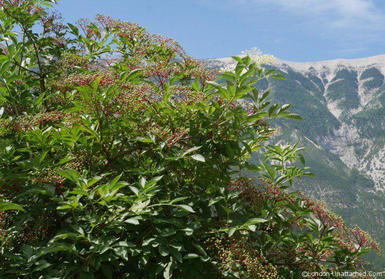 Terroir - Cotes du Rhone - Brantes - Elderberry