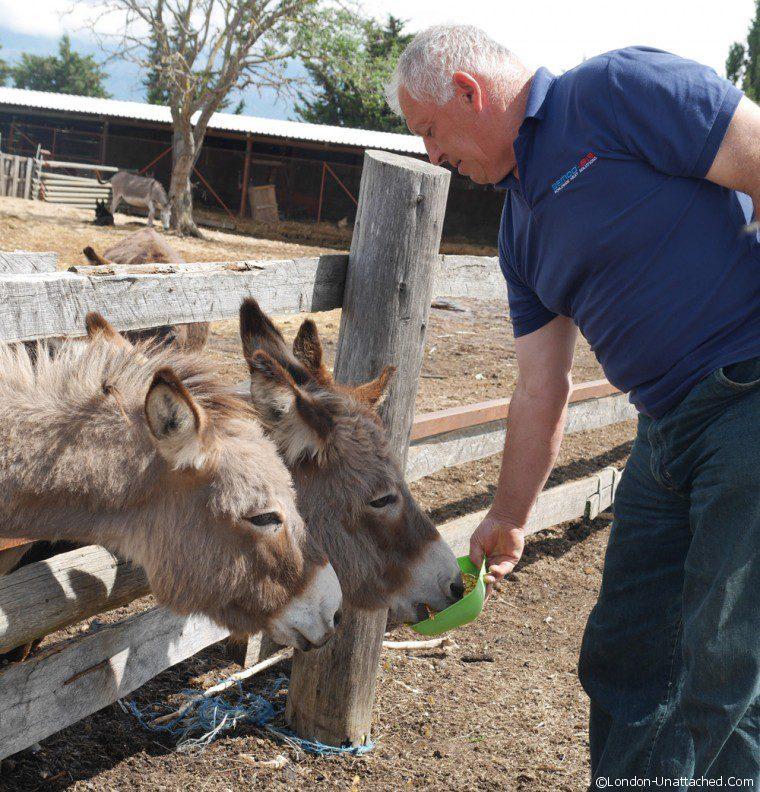 Nin Feeding the donkeys