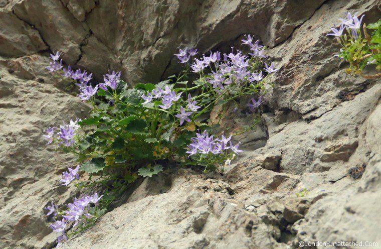 Paklenica - flowers