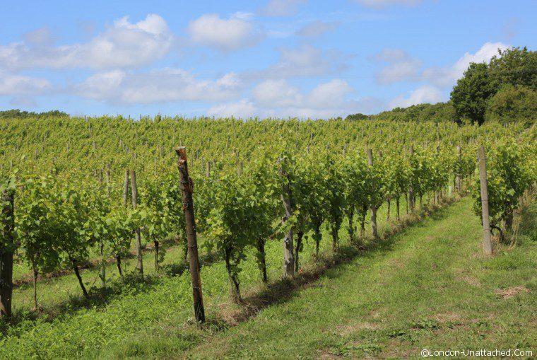 Sedlescombe Vines 2