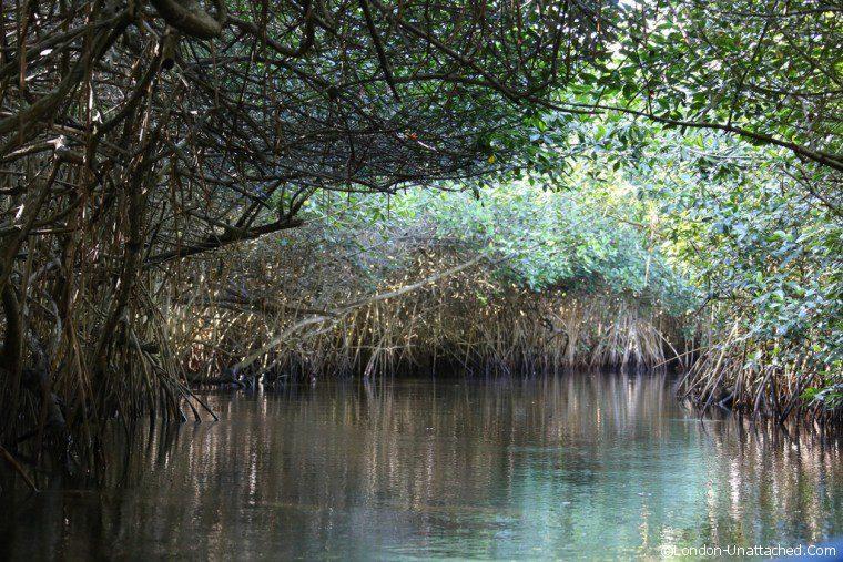 Mexico La Tovara Mangroves