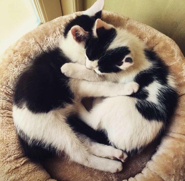 Domino and Oreo 2