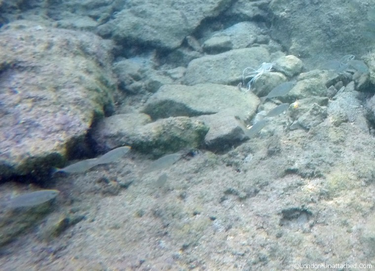 Snorkeling in the Med