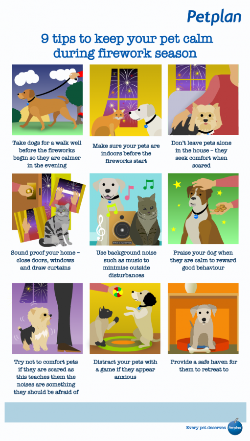 Petplan Bonfire Night infographic