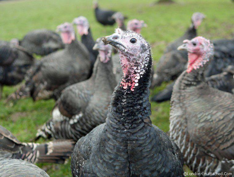 Copas Turkey 3