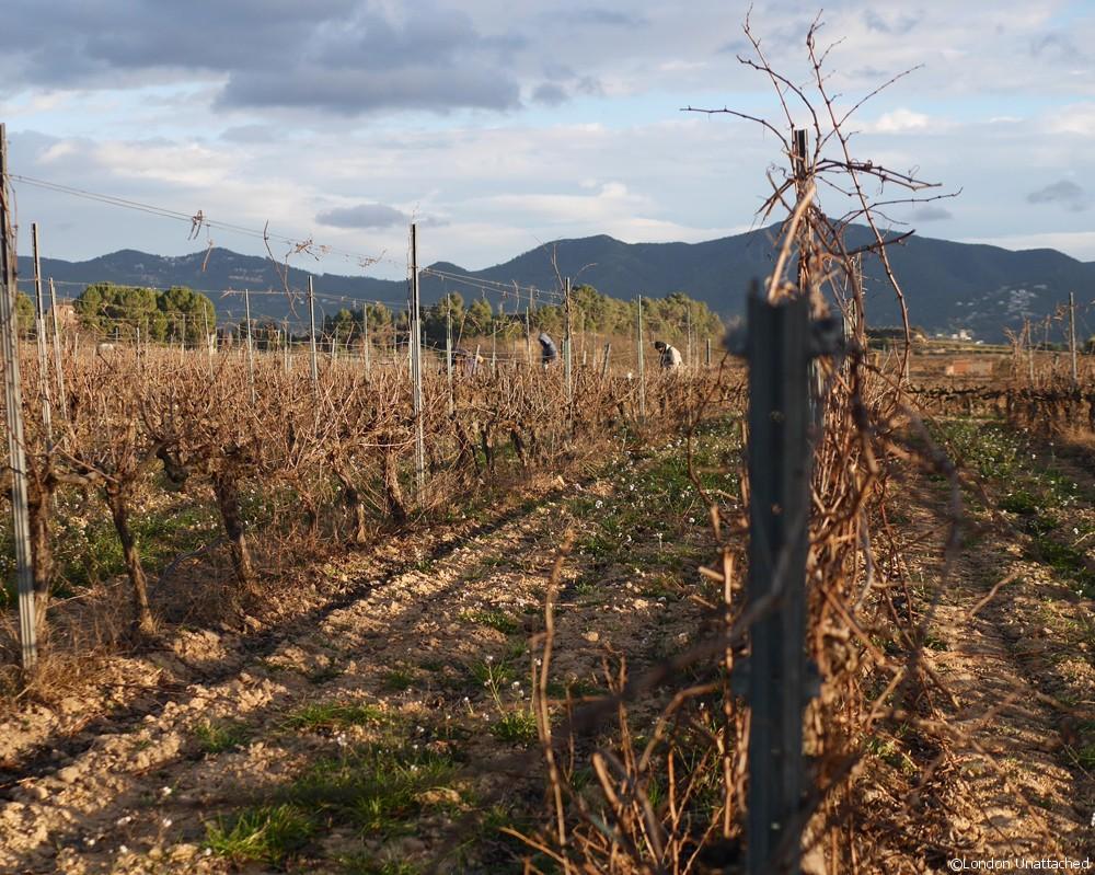 Vilarnau Vines 2