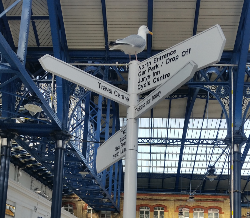 Brighton Railway Station Seagull