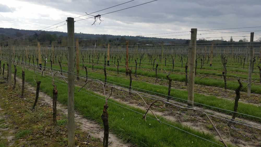 Vines at Jenkyn Place