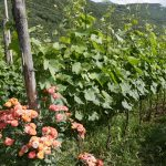 Vinoa – #Giveaway and Christmas Gift Suggestion