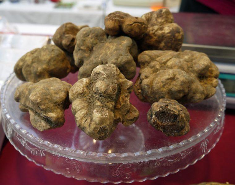 san-miniato-Tuscany-white truffle