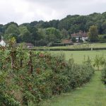 A Day in the Country – Hush Heath Vineyard and the Tickled Trout