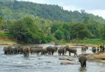Sri Lanka: Jungles, mountains, tea and elephants