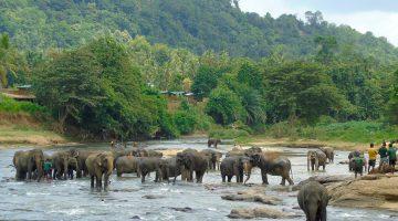 Sri Lanka: Jungles, mountains, tea and elephants