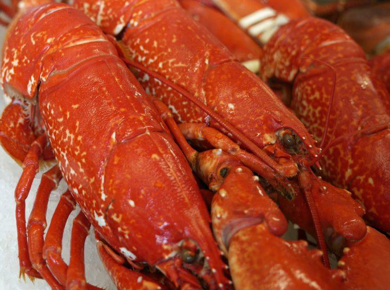 jersey-lobster-copy