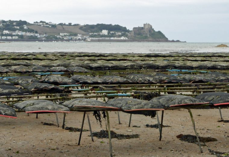 jersey-oysters-on-the-beach-copy