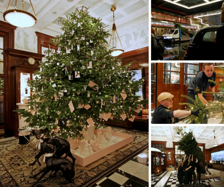 putting-up-the-christmas-tree-savoy