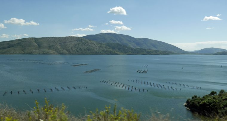 butrint-mussel-farming-2