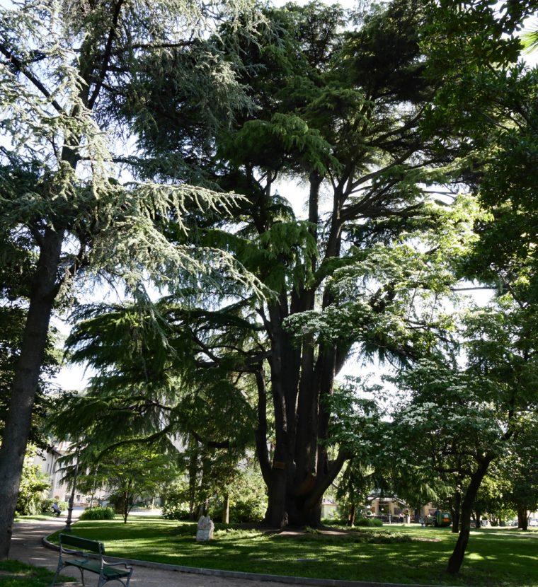 Arco Park