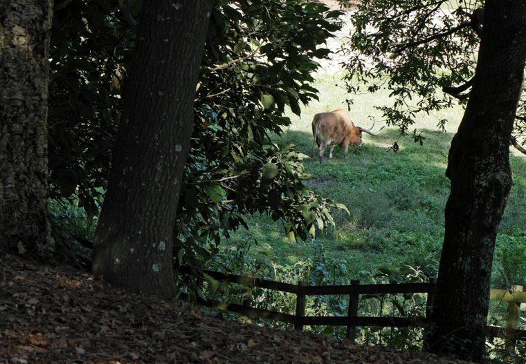 Porto Serralves Foundation - rare breeds