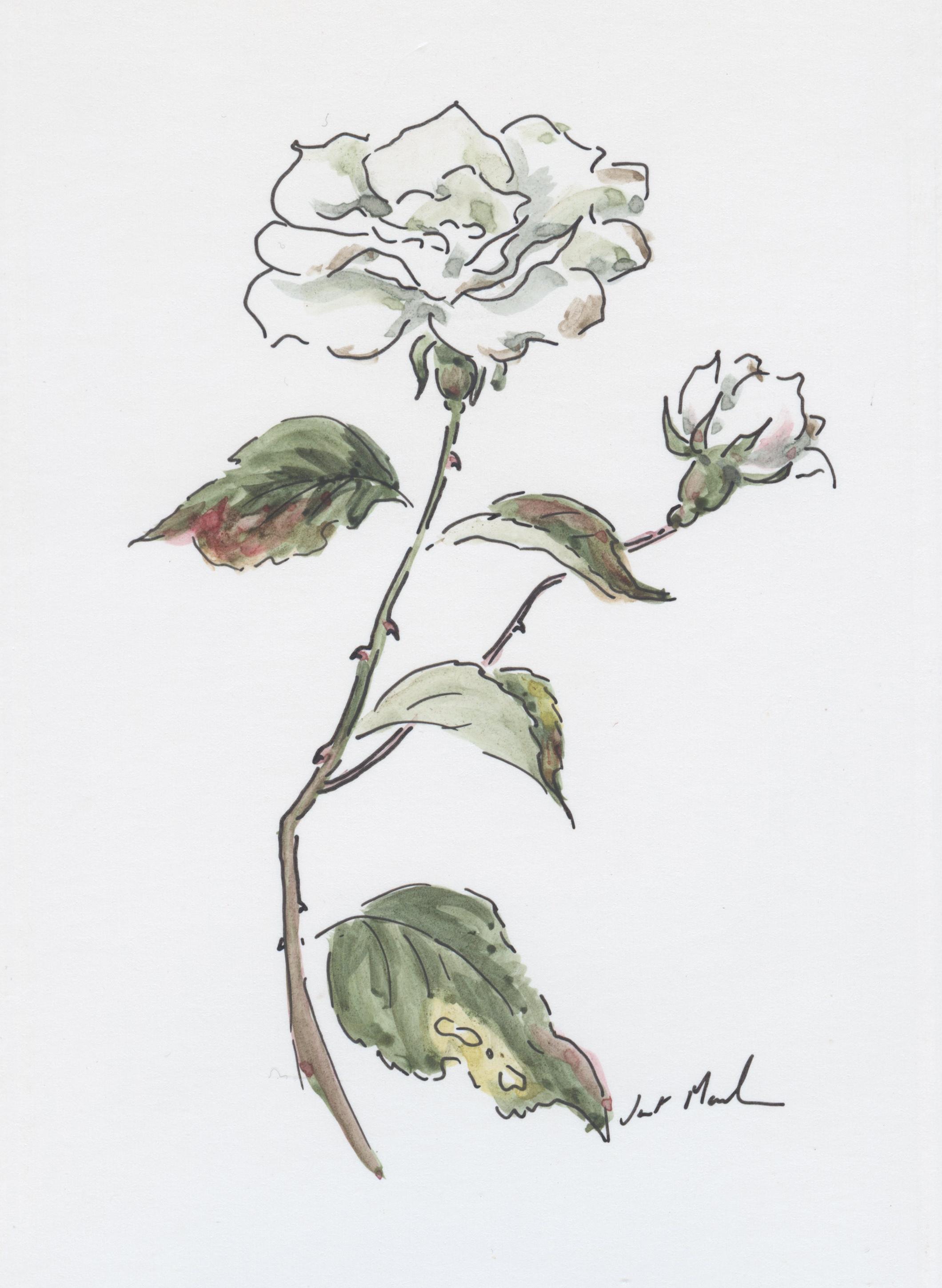 Rose - Janet Maclean