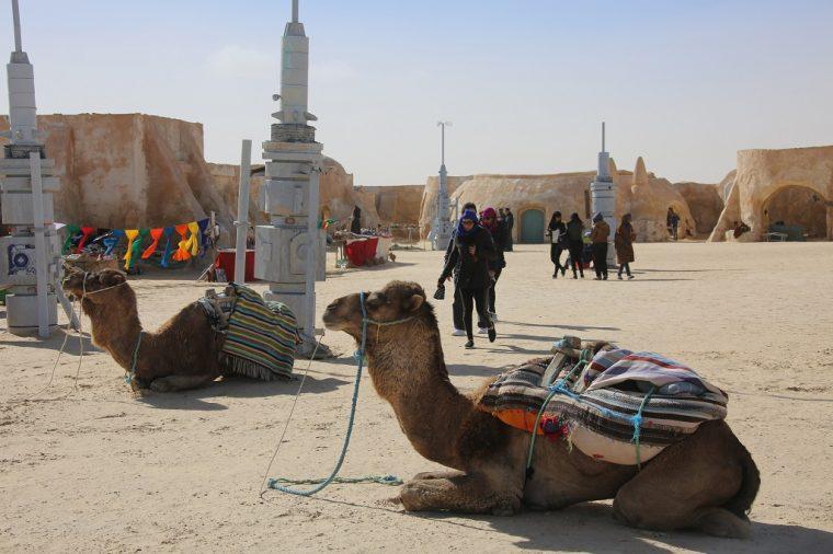 Tunisia Camels at Mos Espa