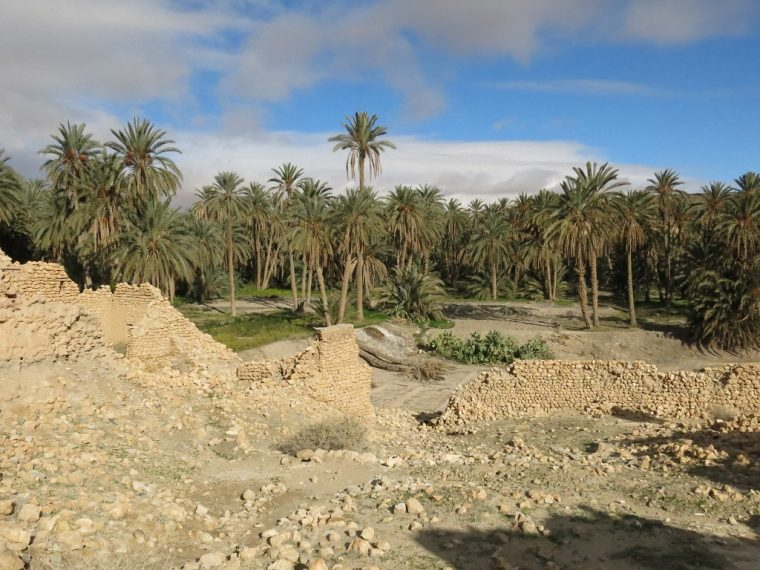 Tunisia Oasis at Tamerza Palm trees