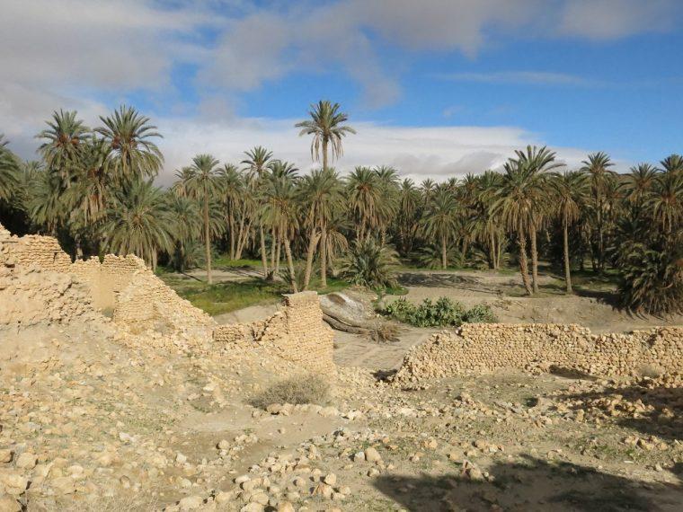 Tunisia Oasis at Tamerza Palm trees