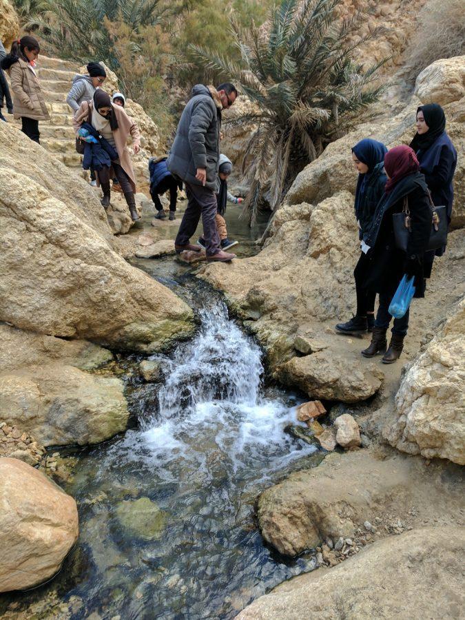 Tunisia Tozeur Oasis at Tamerza