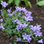 BloomBox Club – Plants to help make your Fingers Green