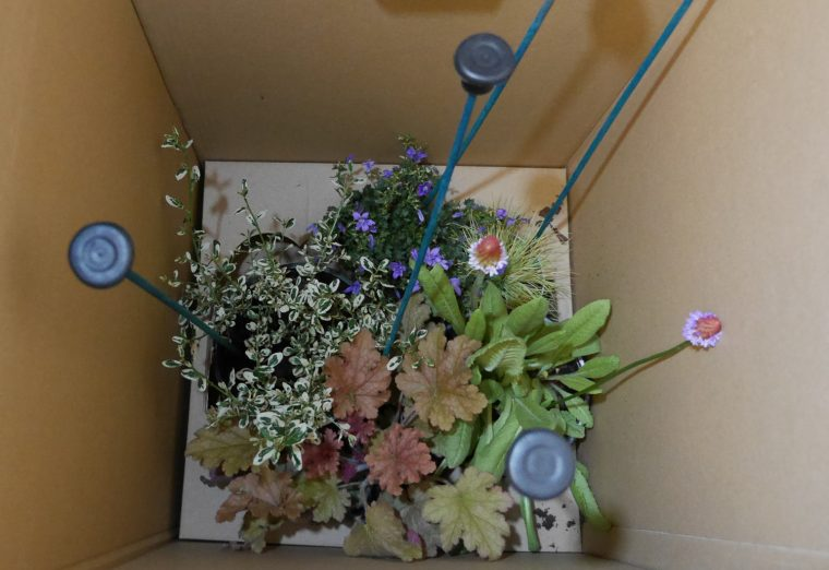 Inside my Bloombox