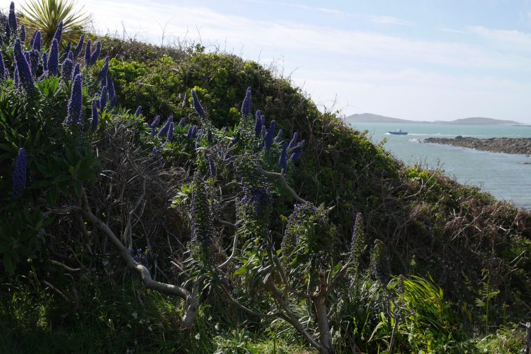 Scilly Isles St Marys 5