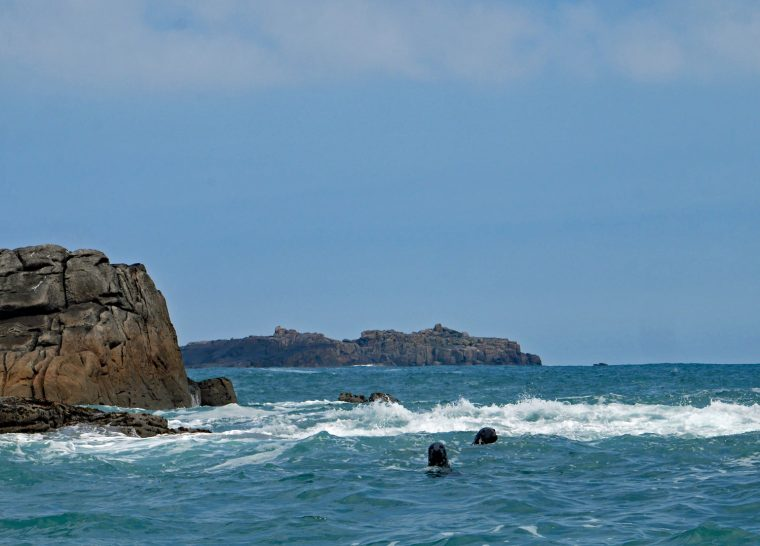 Seals in the Scilly Isles