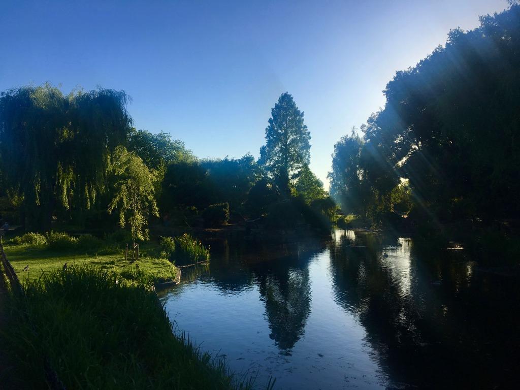 Reflection - Regents Park London