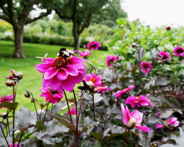 Bee - Houghton Hall
