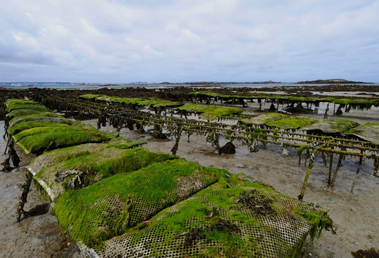 Oyster Beds Herm