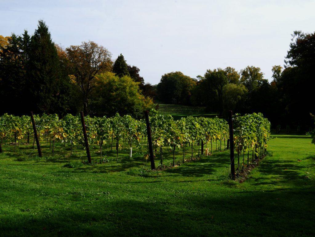 Belgium Wallonia Chateau de Bioul Vines