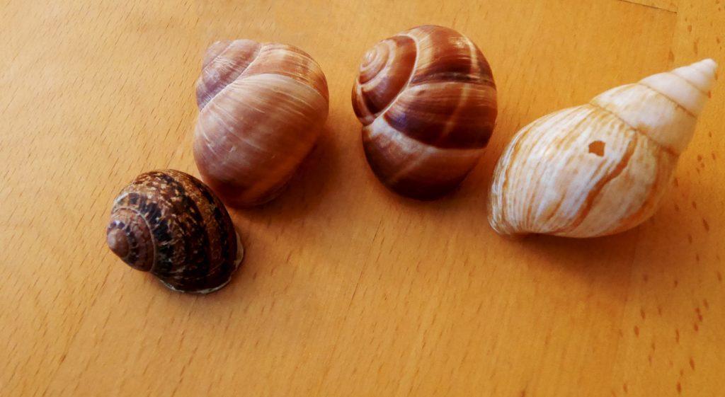 Different Snails - Petits Gris de Namur Wallonia