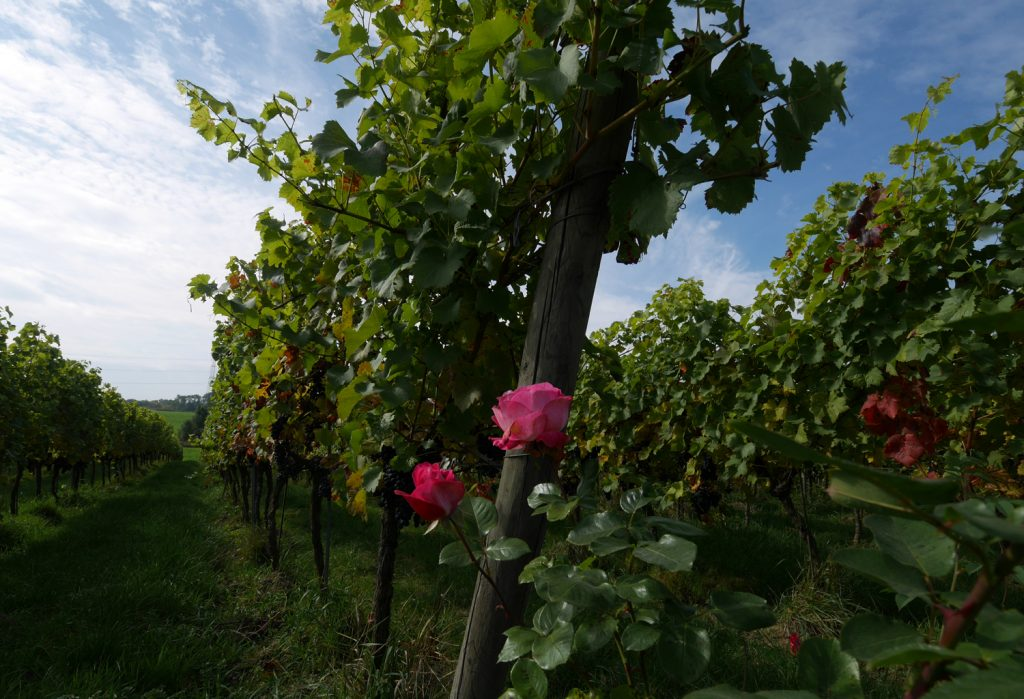 Domaine du Chenoy Wallonia Belgium Vines