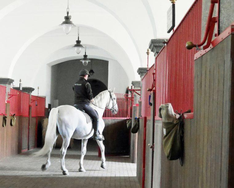 Horse at Kladruby 2