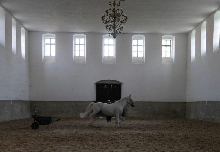 Horse at Kladruby