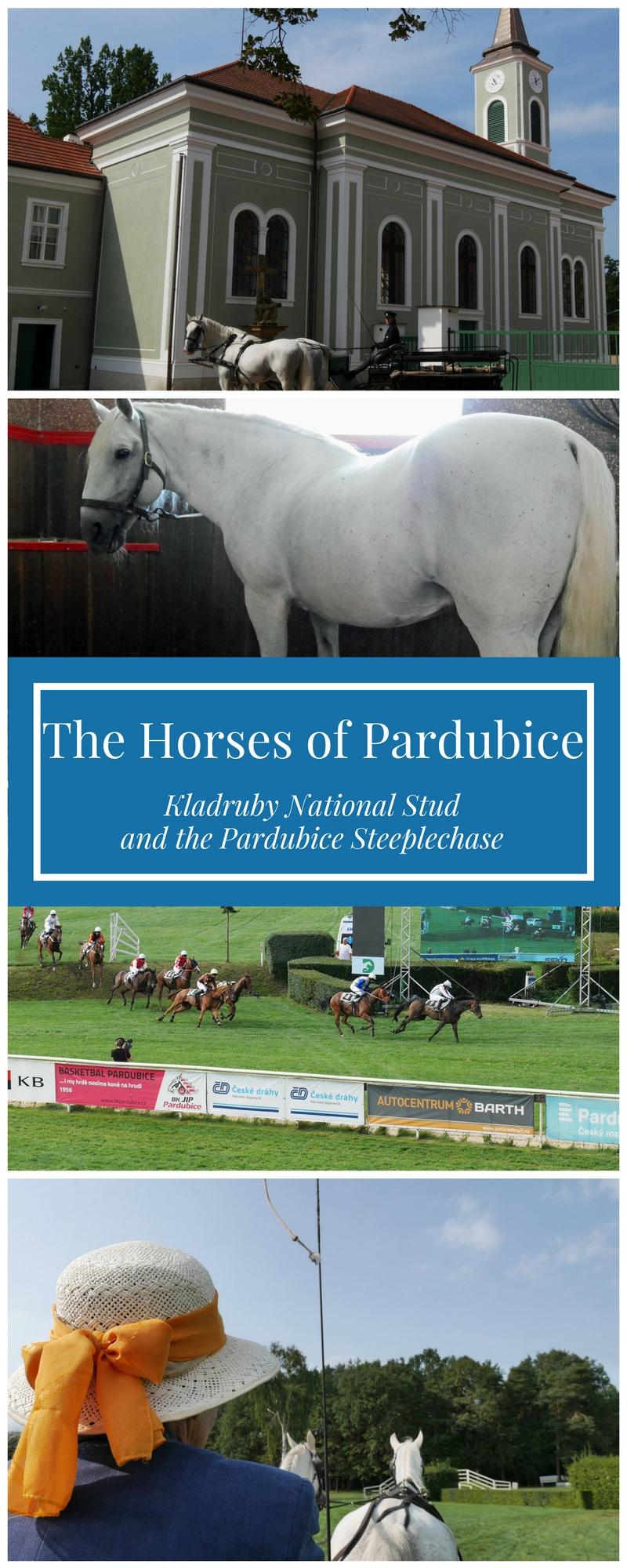 Horses of Pardubice Czech Republic
