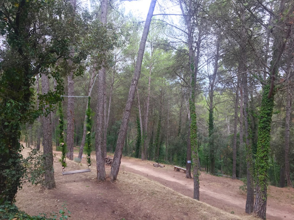 La Garriga de Castelladral - forest