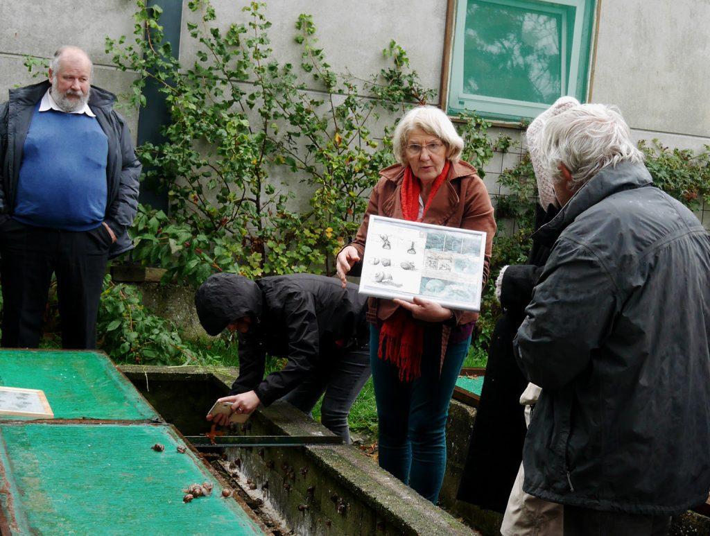 Snails at Ferme de Vieux Tilleul