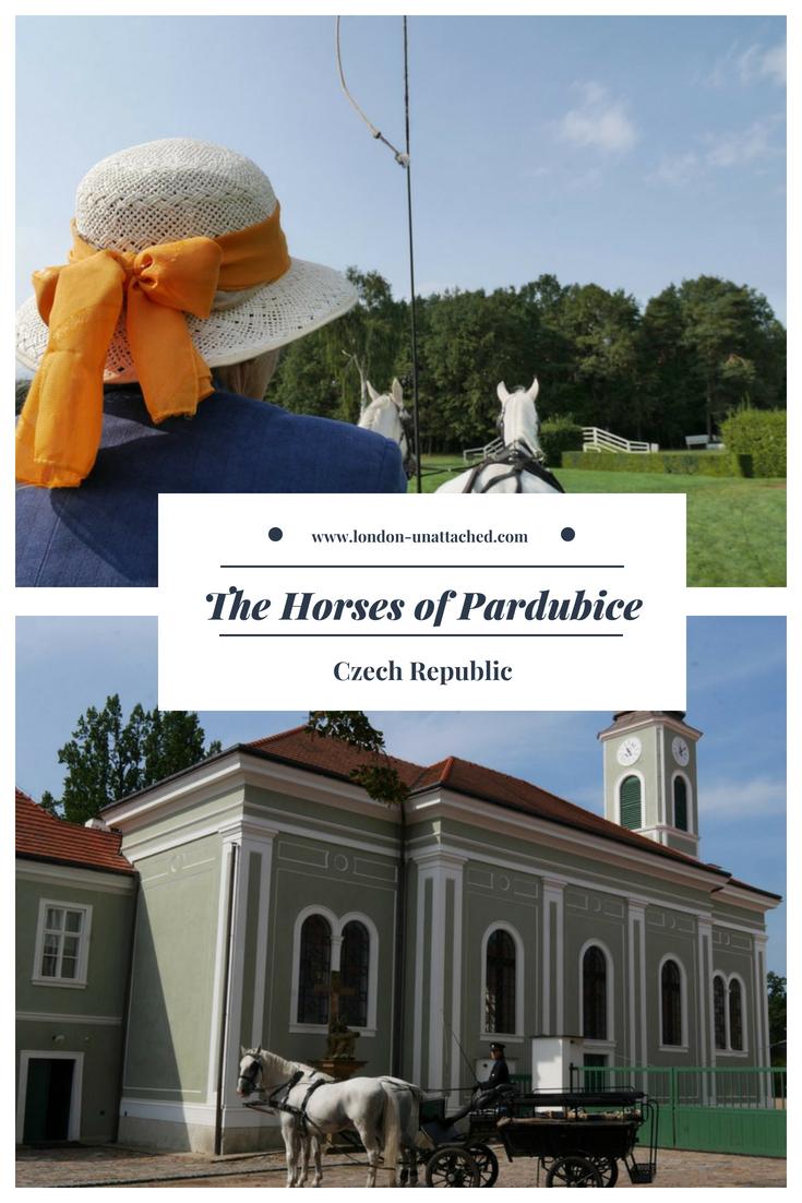 The horses of Pardubice, Czech Republic