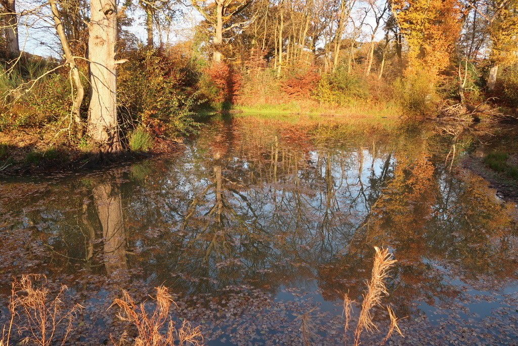 Autumn reflections - Autumn reflections Adventure Yogi