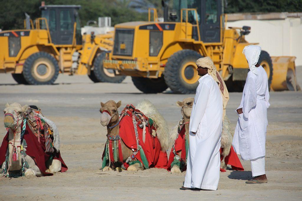 Qatar Doha Desert Camel Rides