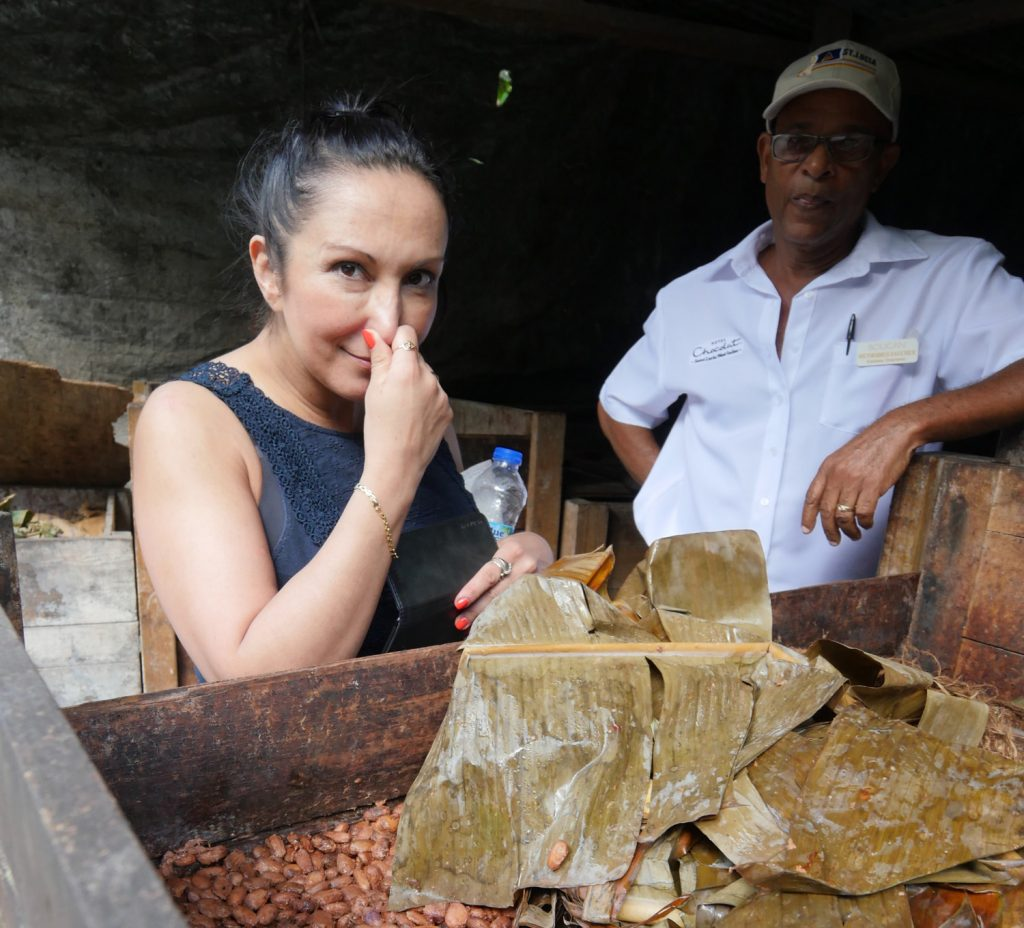 Fermenting cocoa beans at Hotel Chocolat Boucan St Lucia