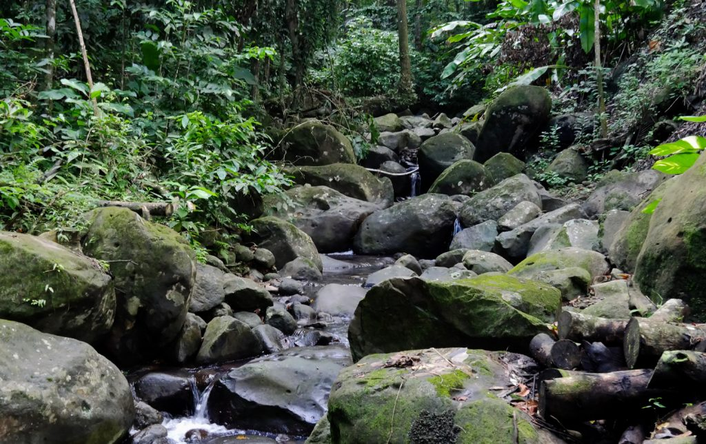 Rainforest Stream - Copy