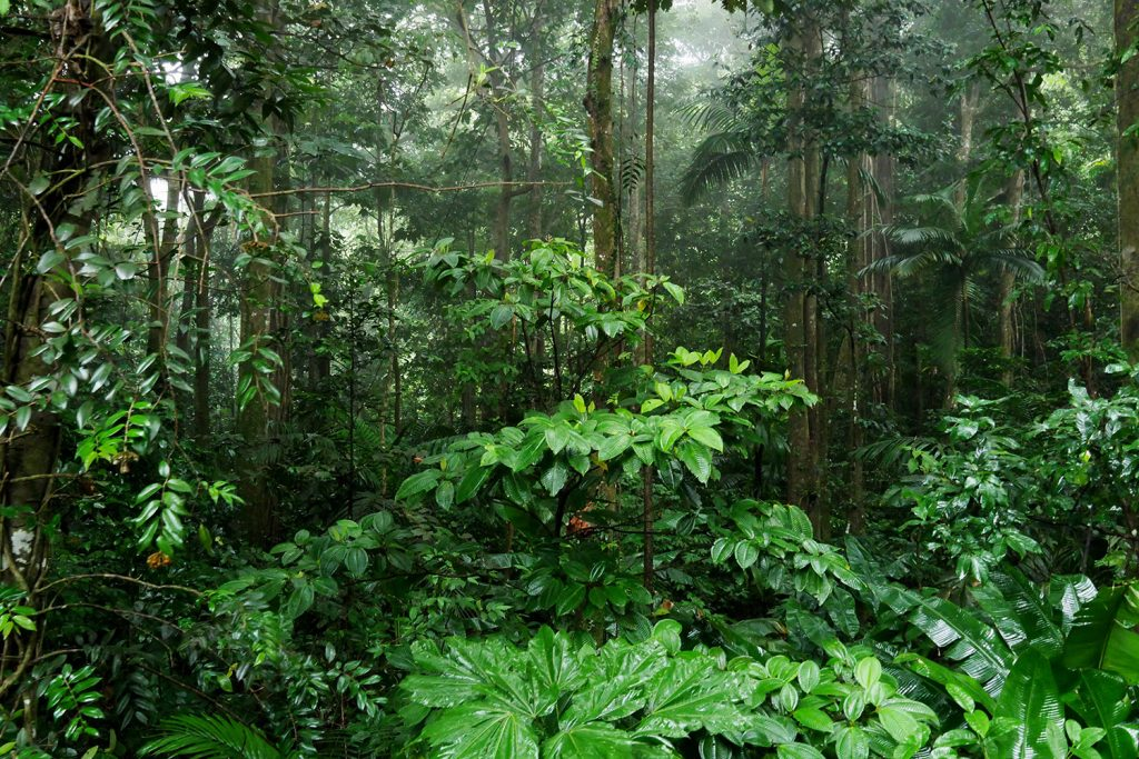 Rainforest in the mist St Lucia - Copy