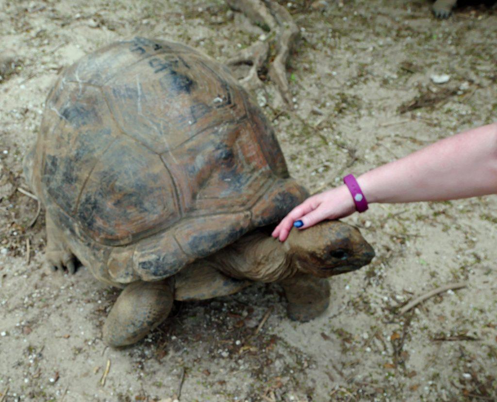 Rodrigues - Giant Tortoises